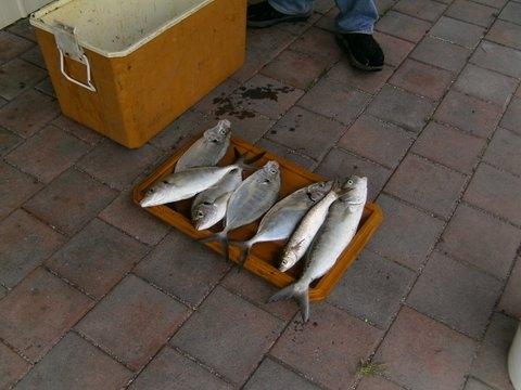 Fish Nov12